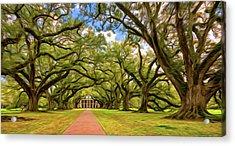Oak Alley 5 - Paint Acrylic Print by Steve Harrington