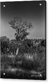 Oak And Palm Acrylic Print by Marvin Spates