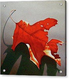 Oak Leaf 1 Acrylic Print by Timothy Jones