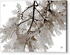 Oak Leaves Acrylic Print by Frank Tschakert