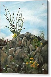 Ocotillo In Bloom Acrylic Print by Roseann Gilmore