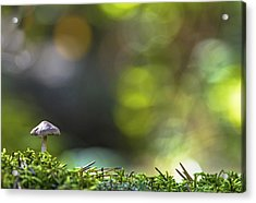 Ode To A Mushroom Acrylic Print by Mary Amerman