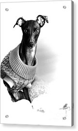 Oh Those Eyes Black And White Acrylic Print by Angela Rath