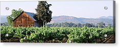 Old Barn In A Vineyard, Napa Valley Acrylic Print by Panoramic Images