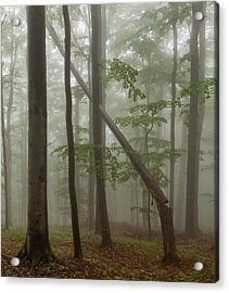 Old Beech Forest Acrylic Print by Evgeni Dinev