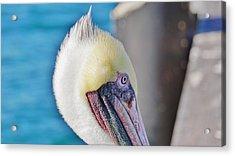 Old Bird Acrylic Print by John Pierpont