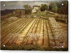 Old Farm House With Almond Trees Acrylic Print by Robert Brown