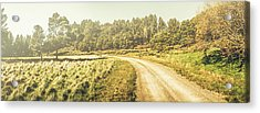 Old-fashioned Country Lane Acrylic Print by Jorgo Photography - Wall Art Gallery