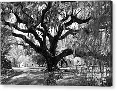 Old Plantation Tree Acrylic Print by Melody Jones