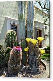 Old Town Scottsdale Color Acrylic Print by Gordon Beck