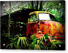 Ole Cow Truck Acrylic Print by Dana  Oliver