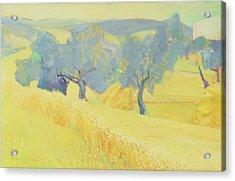 Olive Trees In Tuscany Acrylic Print by Antonio Ciccone