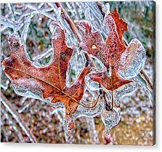 On A Cold Day Acrylic Print by Susan Leggett