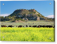On A Field Of Yellow Acrylic Print by Todd Klassy