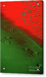 On A New Planet Acrylic Print by Susanne Van Hulst