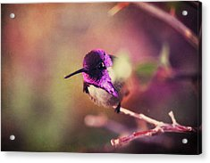 On An Evening Like This Acrylic Print by Laurie Search
