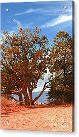 On The Edge Acrylic Print by Kathleen Struckle