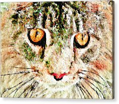 One Cool Cat Acrylic Print by Terry Mulligan