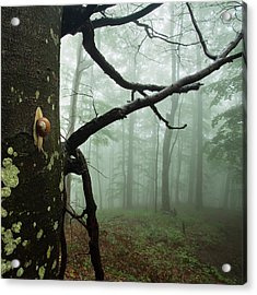 One Day Of The Snail's Life Acrylic Print by Evgeni Dinev