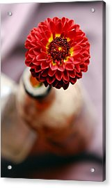 One Flower In Old Bottle Acrylic Print by Laura Mountainspring