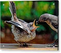 Open Wide Acrylic Print by Sue Melvin