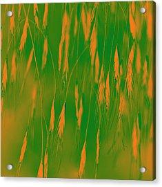 Orange Grass Spikes Acrylic Print by Heiko Koehrer-Wagner