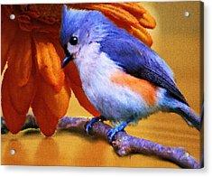 Orange Medley Acrylic Print by Jai Johnson