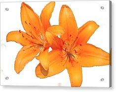 Orange Acrylic Print by Robert OP Parrish