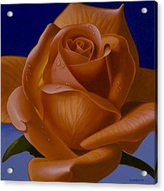 Orange Rose With Blue Background Acrylic Print by Tony Chimento