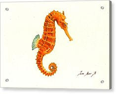 Orange Seahorse Acrylic Print by Juan Bosco