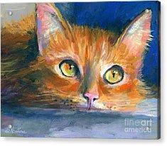 Orange Tubby Cat Painting Acrylic Print by Svetlana Novikova