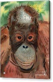 Orangutan Acrylic Print by Donald Maier