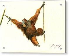 Orangutan Acrylic Print by Juan Bosco