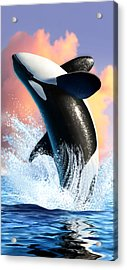 Orca 1 Acrylic Print by Jerry LoFaro