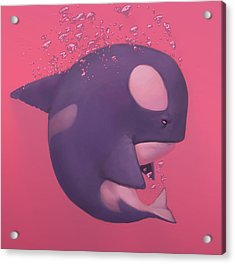 Orca Acrylic Print by Adam Ford