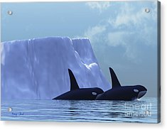 Orca Acrylic Print by Corey Ford
