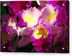 Orchid 1 Acrylic Print by Marty Koch