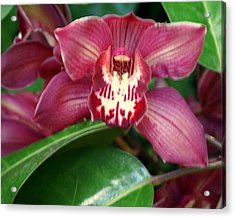 Orchid 10 Acrylic Print by Marty Koch