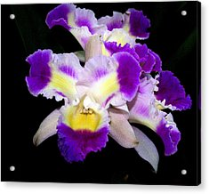 Orchid 13 Acrylic Print by Marty Koch