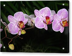 Orchid 2 Acrylic Print by Marty Koch