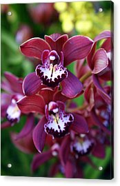 Orchid 20 Acrylic Print by Marty Koch