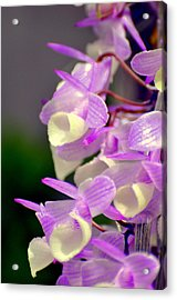 Orchid 25 Acrylic Print by Marty Koch