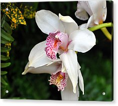 Orchid 29 Acrylic Print by Marty Koch
