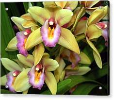 Orchid 7 Acrylic Print by Marty Koch