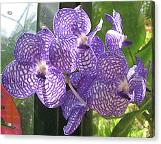 Orchid Acrylic Print by Darren Stein