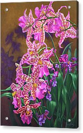 Orchid Fever 3 Miltonia Acrylic Print by Fiona Craig