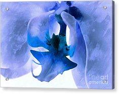 Orchid Of Blue Acrylic Print by Krissy Katsimbras