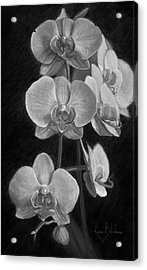 Orchids - Black And White Acrylic Print by Lucie Bilodeau