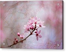 Oriental Blossom Acrylic Print by Jacky Parker