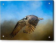 Osprey Over Pickwick Acrylic Print by Jai Johnson